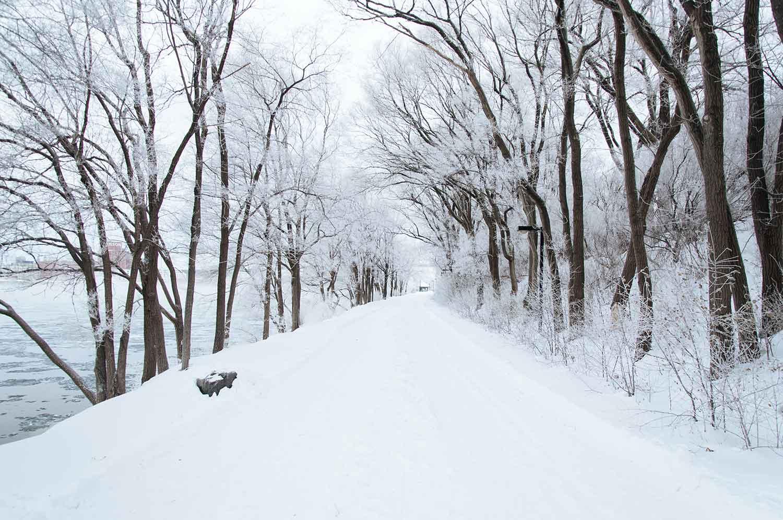 temporal, nieve