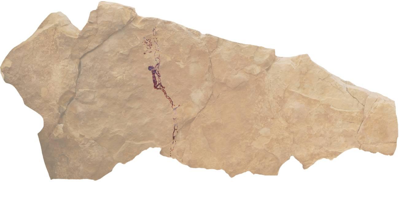 miel pinturas rupestres arte levantino